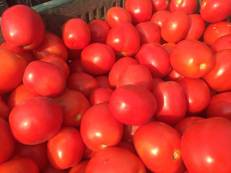 Criza de rosii pe piata? La en-gros, pretul sare de 4,5 lei/kg si va mai creste!