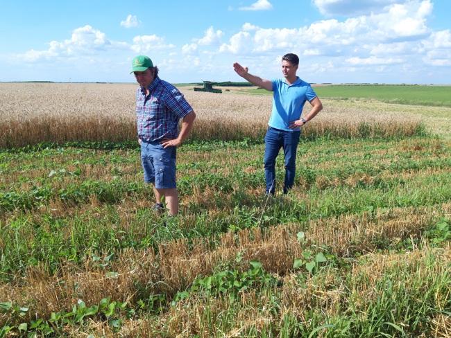Cum fac belgienii agricultura ecologica pe 1.600 ha la Birda (Timis)