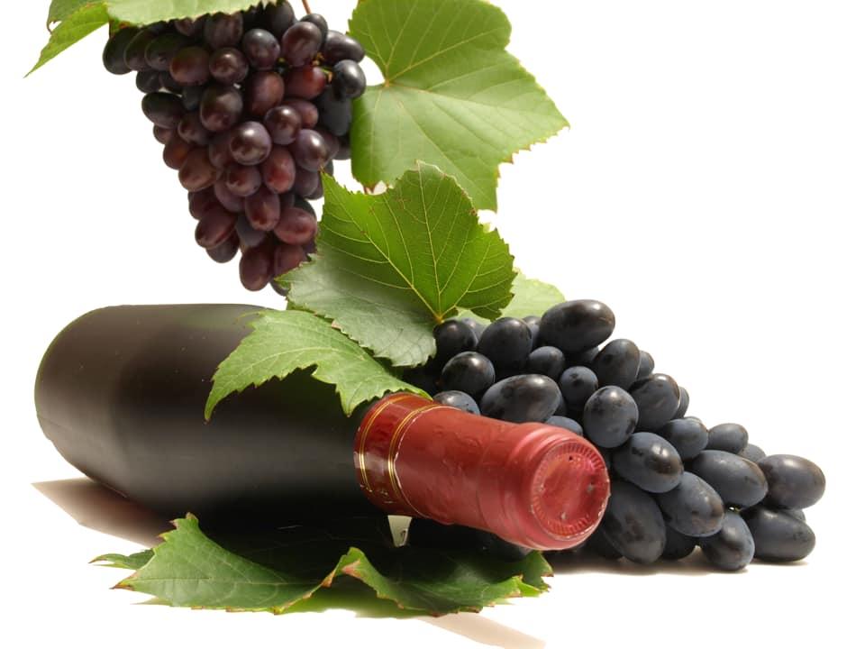 Bani pentru restructurarea si modernizarea plantatiilor viticole