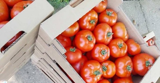 Peste 200 mil. lei platiti producatorilor de tomate. Olt, Galati, Giurgiu – judetele frutase