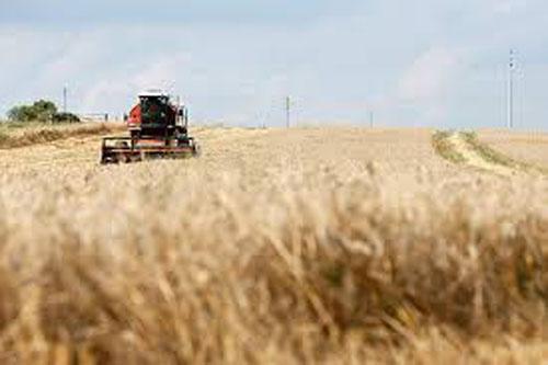 FAO: Preturi mai mici la cereale, in august