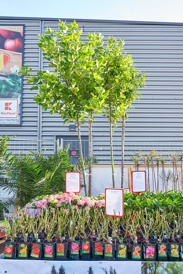 Primul targ de plante, organizat in parcarile magazinelor Kaufland Romania