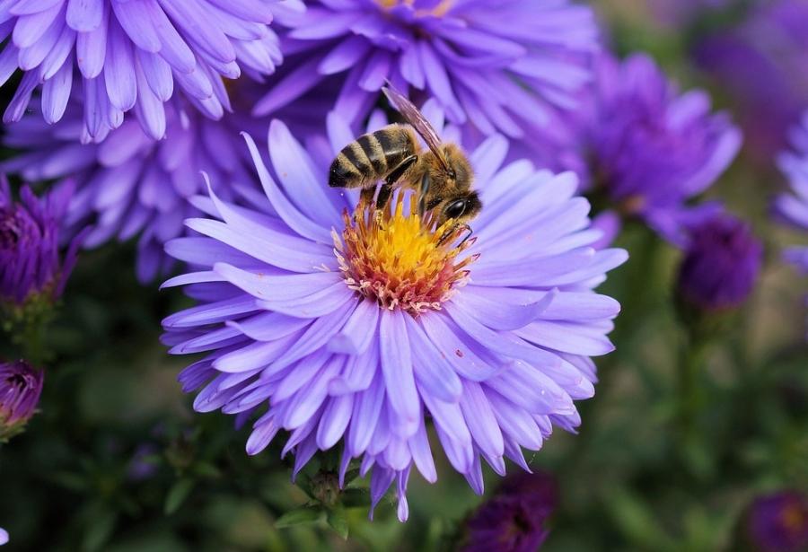 Sprijin financiar de 20 lei/familie de albine. Cum puteti obtine ajutorul