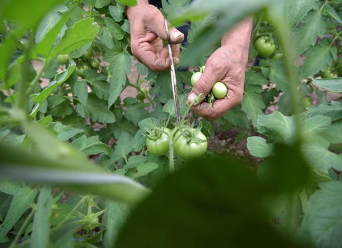 Intalnire a expertilor agricoli din Europa si Asia la Chisinau
