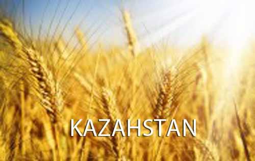 Kazahstan pregateste 2 mil. tone de grau pentru China!