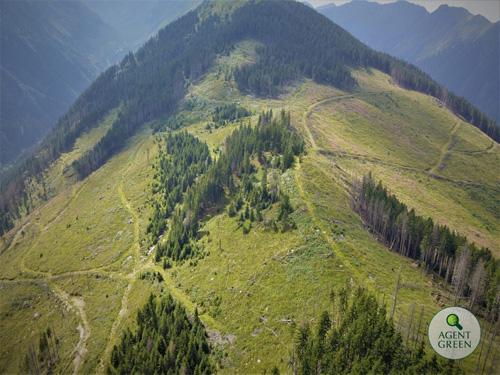 Organizatiile de mediu au cerut Comisiei Europene sa intervina pentru padurile din Romania