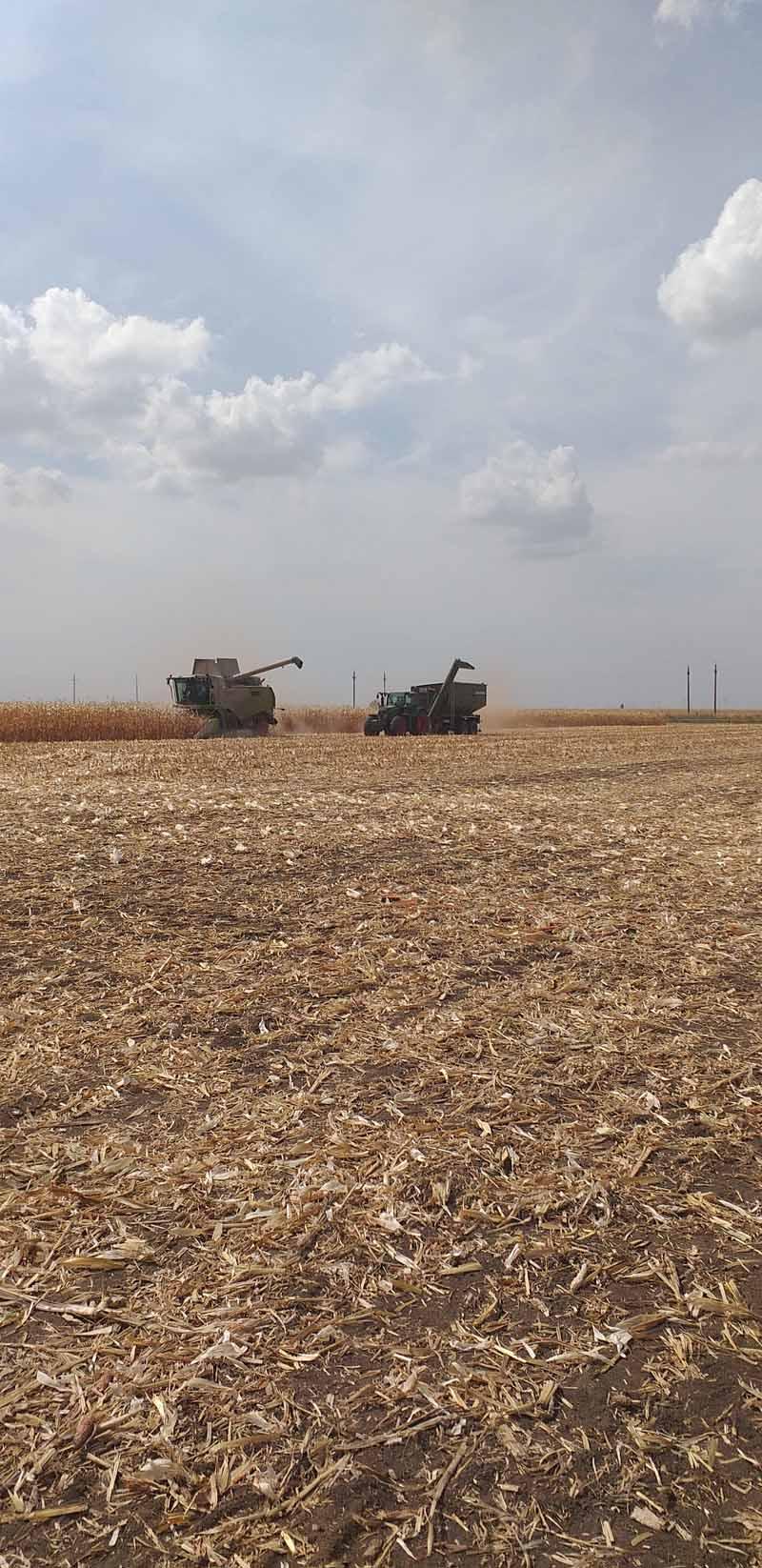 2019 – un an greu pentru fermierii din Dobrogea