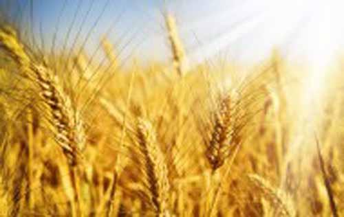 ADAMA a intrat in actionariatul AGRICOVER, principalul distribuitor de input-uri agricole