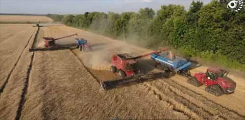 Recoltat XXL in Ucraina pe 12.000 ha la Agro KMR