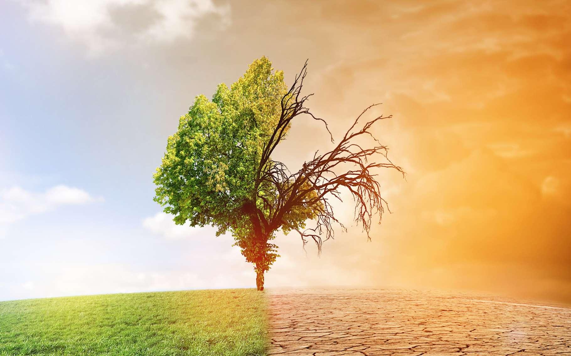 Schimbarile climatice modifica fata agriculturii romanesti! Desertificarea, un mare pericol!  (Analiza)