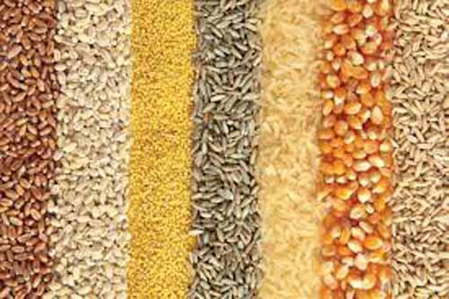 Productii agricole mai mici in acest an. Graul si floarea soarelui, pe plus!