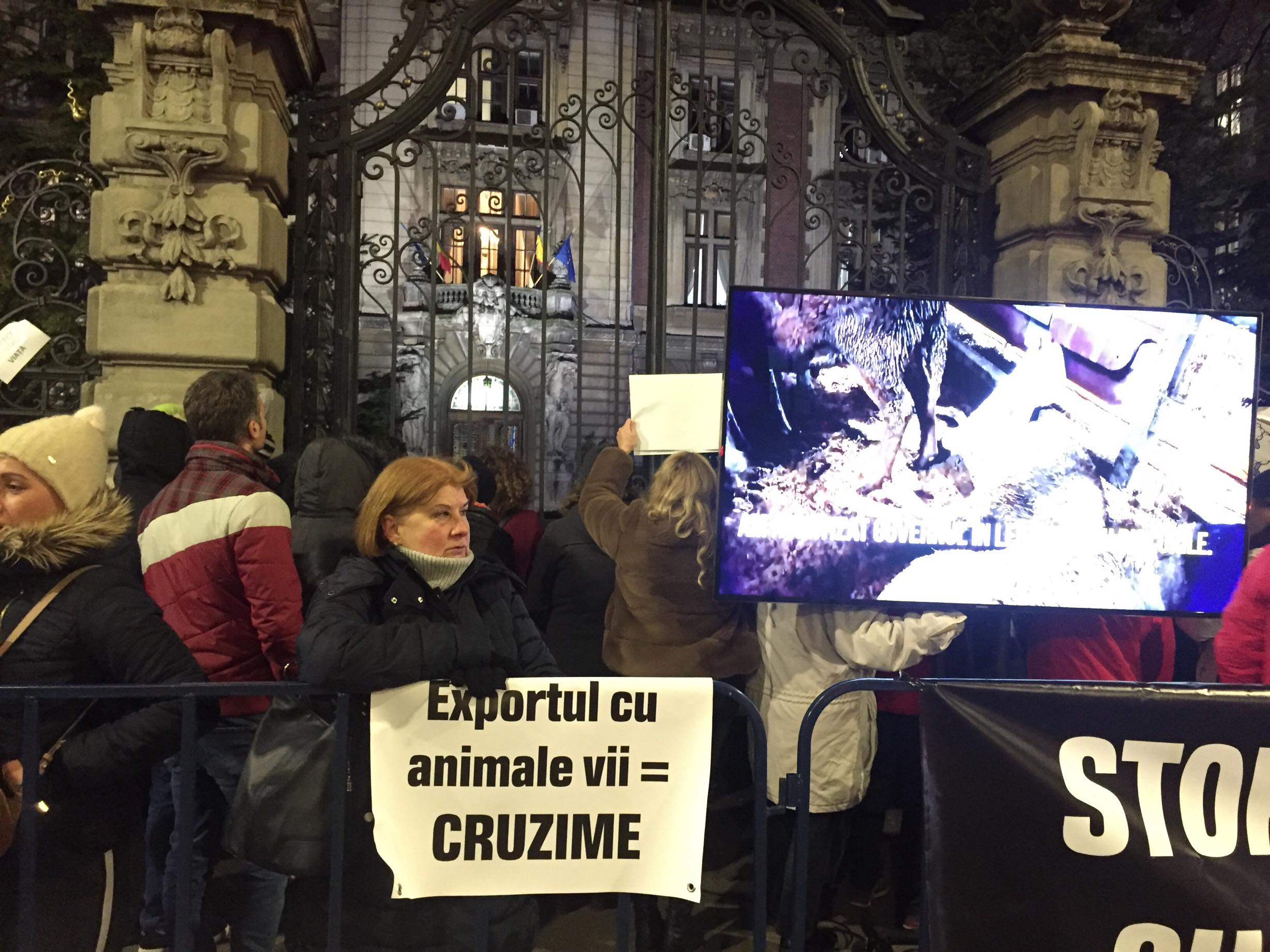 Stop Vapoarelor mortii! Acum! Mai multe ONG-uri cer Ministerului Agriculturii sa interzica exportul de animale vii!