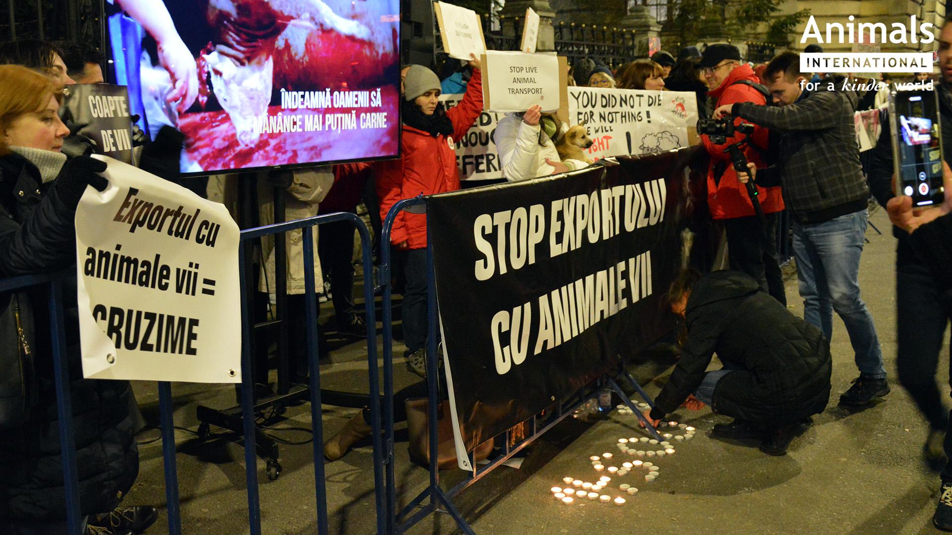 Rezultatele protestului de la Ministerul Agriculturii, in opinia  ONG-urilor care cer stoparea exporturilor de animale vii
