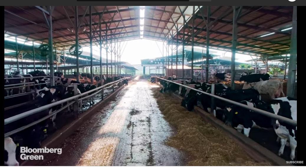 Vacile, cimentul si otelul – cei mai mari poluatori