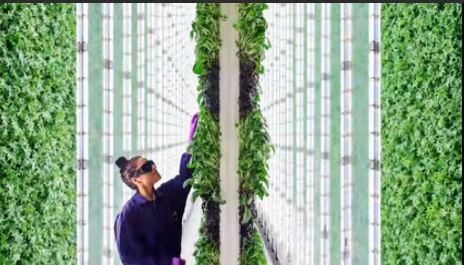 Viitorul fermelor este in oras!