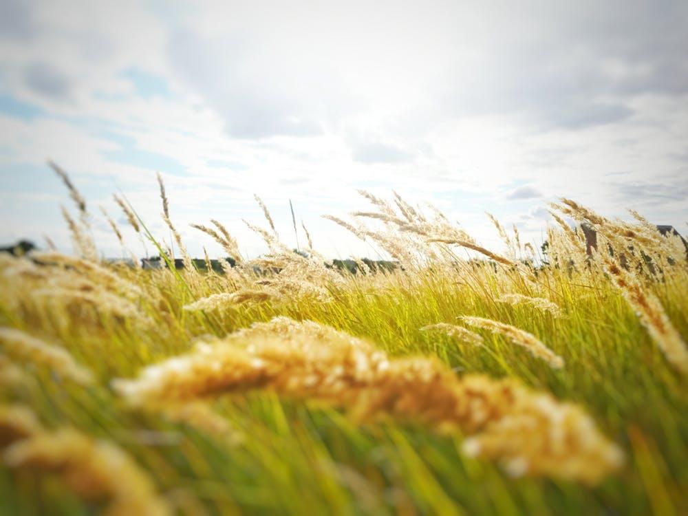 Rusii si ucrainenii continua sa exporte cereale
