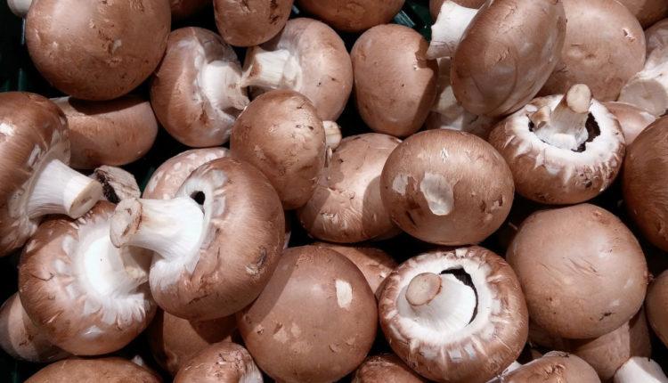 Cum ar putea fi valorificat compostul de ciuperci