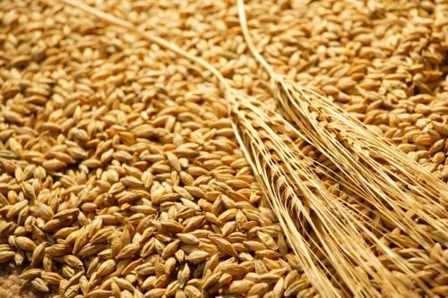 Romania suspenda exporturile de cereale in afara UE! Mai avem grau pana la noua recolta?