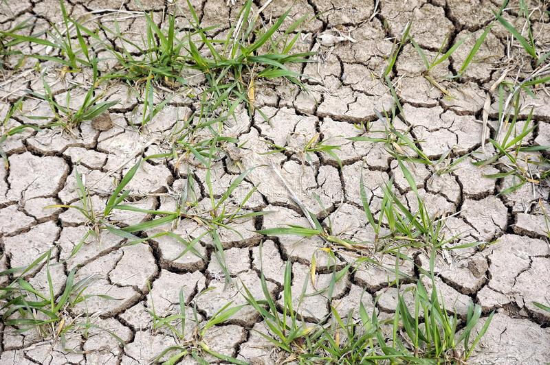 Ministerul Agriculturii estimeaza o productie de grau de circa 5 mil. de tone, in acest an