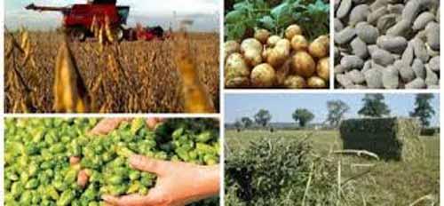 Platile pentru sprijinul cuplat la culturile vegetale incep la data de 16 mai