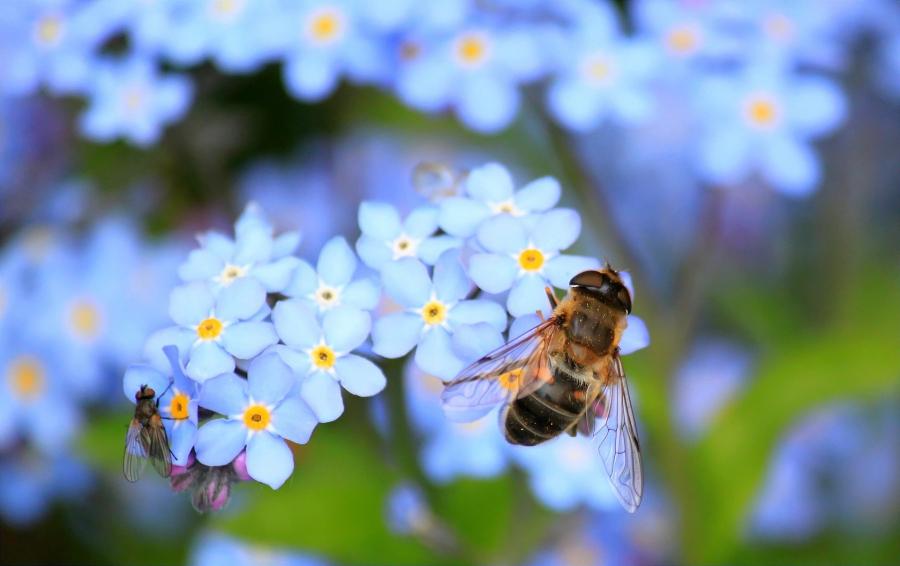 Bani pentru apicultori