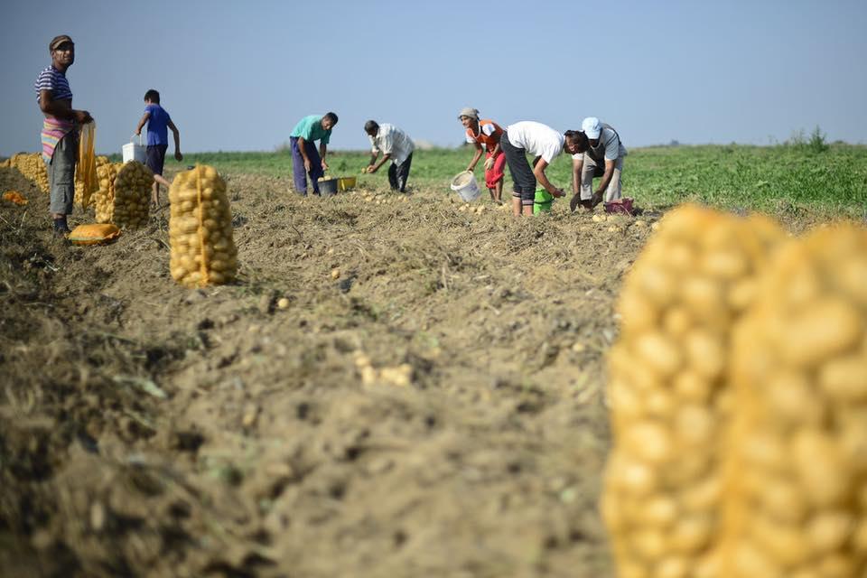 41.000 de fermieri primesc sprijinul cuplat pentru 2019 la culturile vegetale