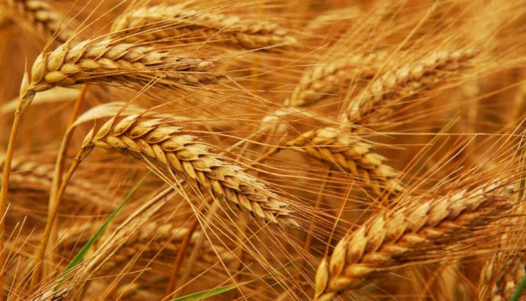 385.000 hectare de culturi agricole compromise de seceta in Ucraina