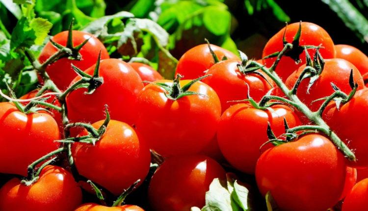 40 milioane de euro pentru Programul Tomata!  Pentru toamna, la rectificare!