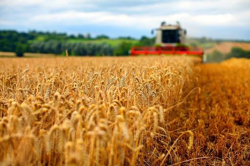 Prognoze Clubul Fermierilor Romani: Productie de grau mai mica in UE, potential de pret mai mare!