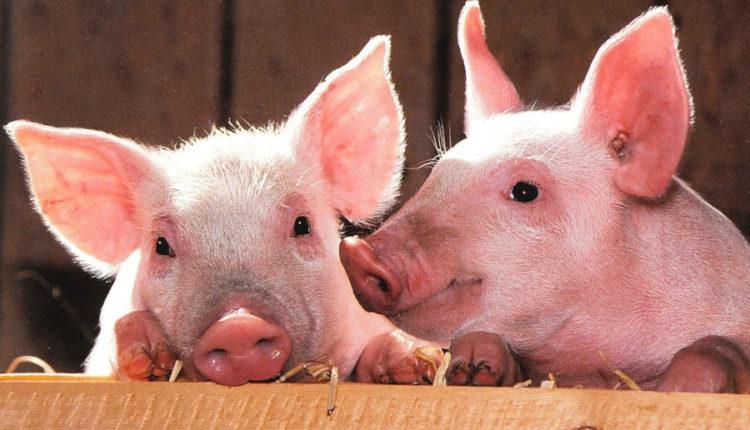 """PRO AGRO: """"Legea mirosului"""" ar putea inchide multe ferme si majora preturile la alimente"""
