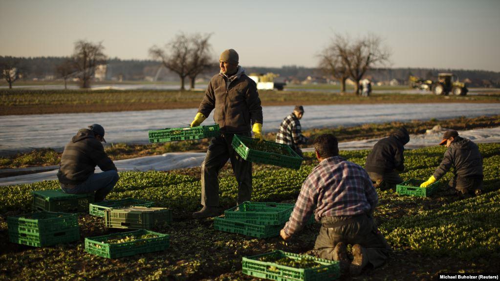 Germania fara restrictii impuse sezonierilor din agricultura. Romanii schimba legea!