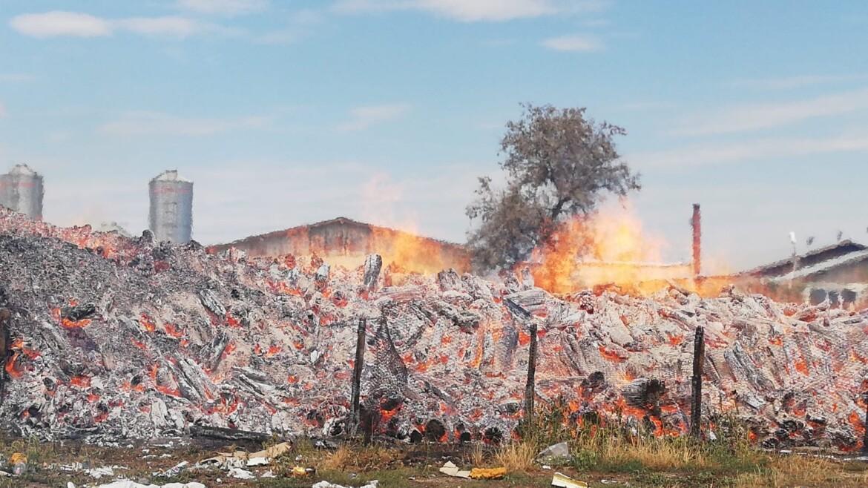 Incendiu puternic la ferma de pasari Morandi din Lipovat (Vaslui)