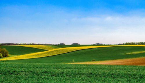 UNCSV: Cooperativele agricole nu sunt pentru toata lumea! Cei care sunt pusi pe combinatii trebuie sa renunte!