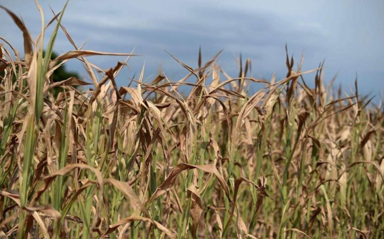 Fermierii cer un acord de urgenta cu bancile! Seceta a afectat 1 milion de hectare si la culturile de primavara