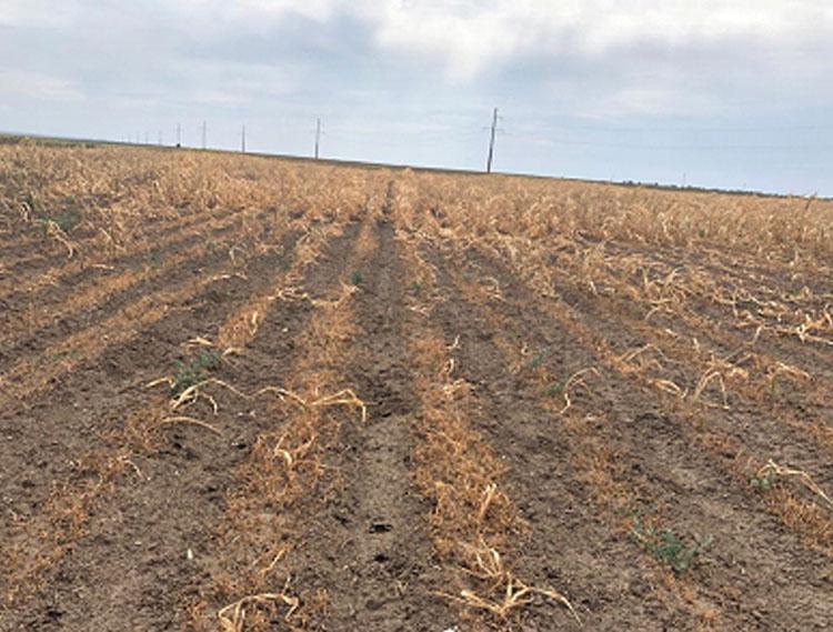 Asociatiile din Agricultura: Plata despagubirilor pentru seceta trebuie sa fie prioritatea zero!