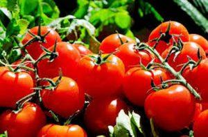 tomata_MADR