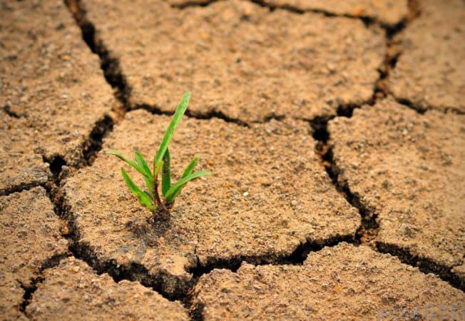APIA plateste ajutorul pentru culturile infiintate in toamna anului 2019, afectate de seceta