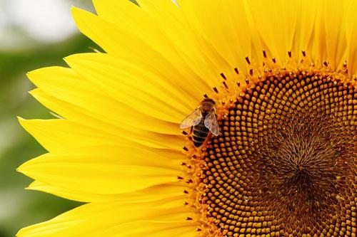Ajutor de minimis pentru apicultori in valoare de 25 lei/familia de albine. 15 septembrie, termenul de depunere a cererii!
