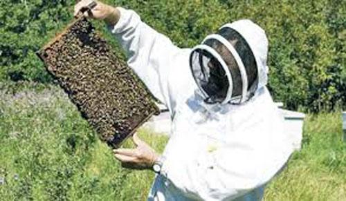 MADR: Au inceput platile pentru apicultori!