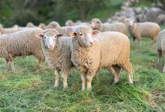 APIA plateste ajutorul de stat in sectorul cresterii animalelor
