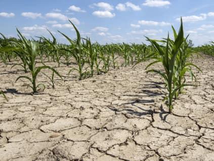 Oros: Despagubirile pentru seceta intra in conturi dupa 18 septembrie!