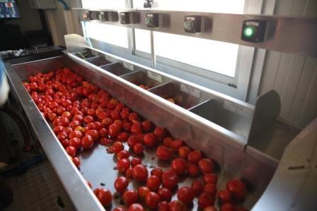 ProdCom Legume-Fructe: Romania produce doar 100 de tone de pasta de tomate