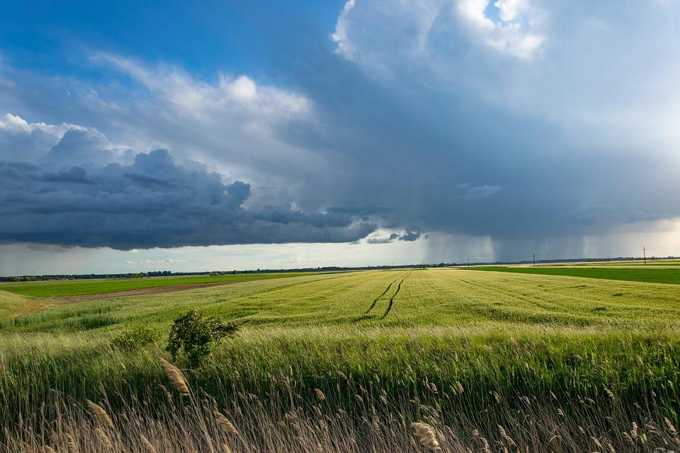Cine sunt beneficiarii celor mai mari subventii din agribusiness-ul romanesc!