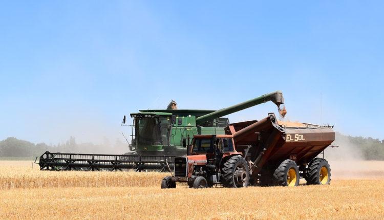 Exporturi de 6 milioane de tone de cereale, la sase luni