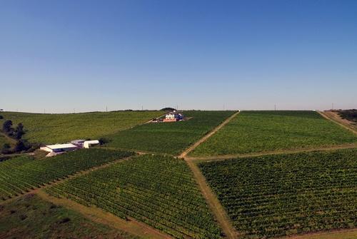 Micii producatori de vinuri trec la vanzarile online, dupa ce pandemia de COVID-19 le-a redus la jumatate vanzarile