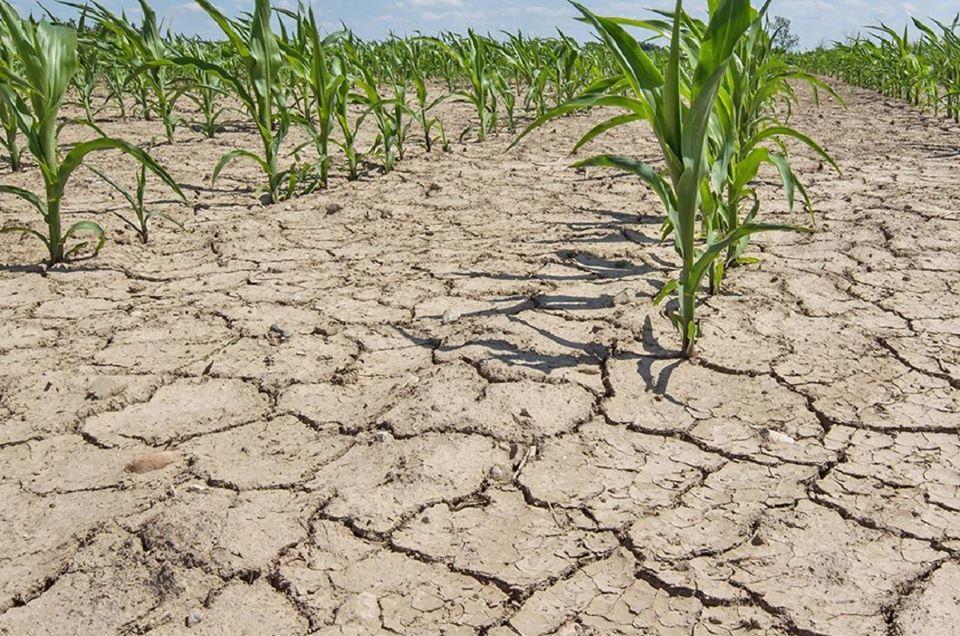 Peste 1,1 milioane ha culturi de primavara, afectate de seceta