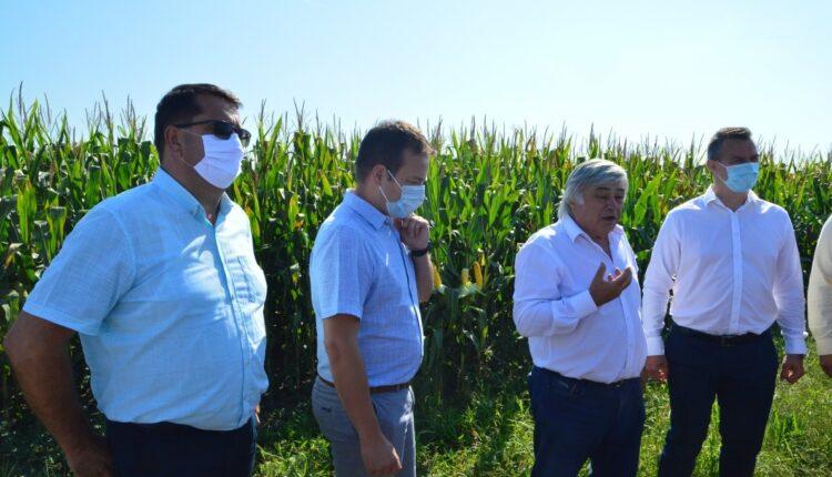 Lupta pentru bogatia Campiei Banatului: agricultura sau gaze de sist?