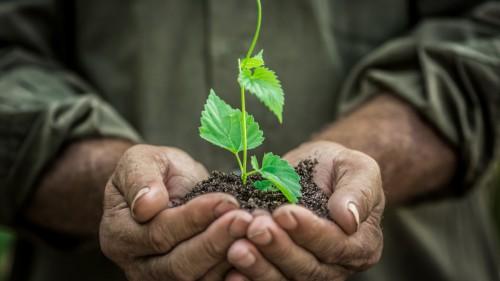 Urmatorul pas mare in Romania. Cultivarea in pepiniere profesionale a rasadurilor sporeste eficienta in horticultura