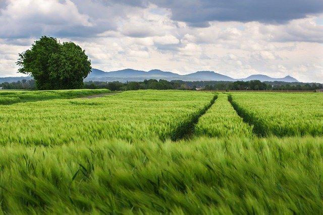 Cum vrea CE sa inverzeasca agricultura europeana