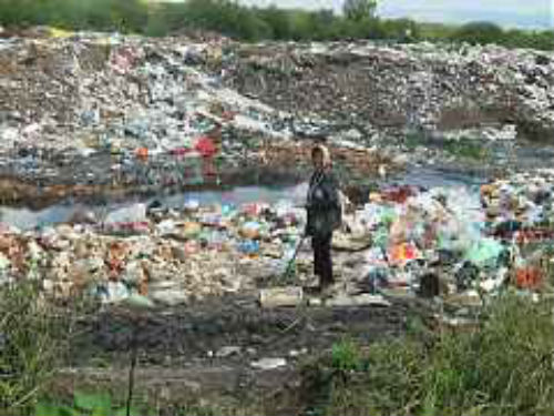 Romanii, obligati sa colecteze separat deseurile biodegradabile!